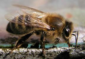 All Natural Methods & Practices of Honeybee...