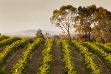 Seppelt Wines  logo