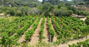 Yakima: Agriculture Labor Laws Forum USDOL/LNI