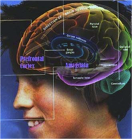 "(Sequoia) ""Inside the Teenage Brain: Trials,..."