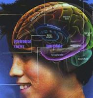 "(Sequoia) ""Inside the Teenage Brain: Trials,..."