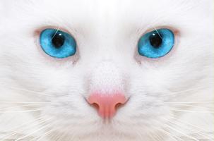 UK CAT GROOMING TRAINING - INTRO TO CAT GROOMING