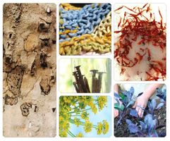 THE ART OF MAKING SEASONAL AND MEDICINAL PLANT COLOR