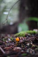 Sonoma Coast Wild Mushroom Hunt