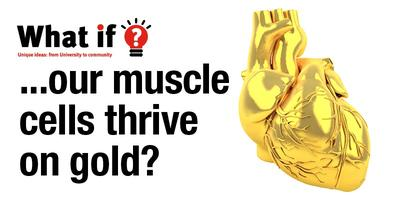What if? Our muscle cells thrive  on gold?