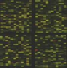 Meetup: Bioinformatics London and London Containing Bioinformatics & Data Analytics logo