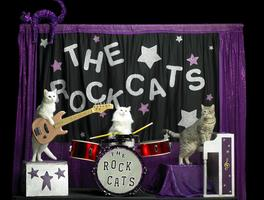 The Acro-Cats Pounce on Portland