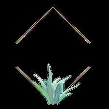 Now and Zen Terrariums logo