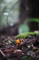 Point Reyes Wild Mushroom Hunt- Wednesday Jan. 8th