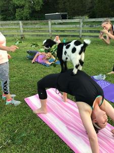 Goat Yoga Nashville logo