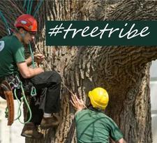 The Tree Tribe logo