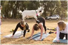 Goat Yoga Houston logo