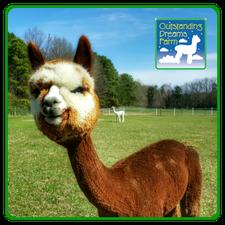 Outstanding Dreams Alpaca Farm logo