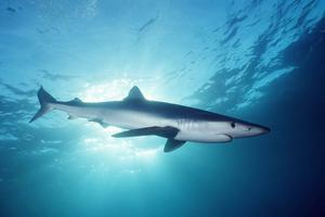 Going Coastal: Sharky Science