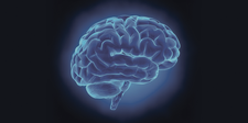Mortimer B. Zuckerman Mind Brain Behavior Institute logo