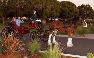 Horse Drawn Winery Tours - Livermore - $80...