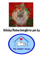 The Rabbit Haven presents Holiday Photo Day