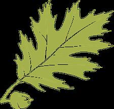 Harold Alfond Institute for Business Innovation logo