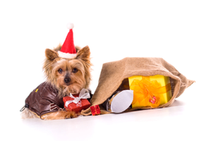 Holiday Dog Toy Drive