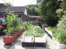Urban Farm Living logo