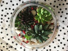 FREE Workshop: Terrarium Making