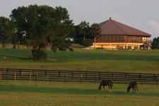 Ocala Jockey Club logo
