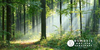 Forest Bathing Spa Meditation Retreat