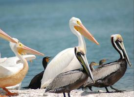 Charlotte Harbor Aquatic Preserves Nature Boat Tour