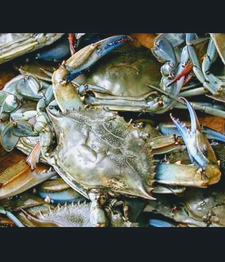 Farmer's Seafood  logo