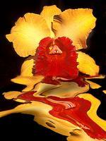 Floral Fusion Artist Registration