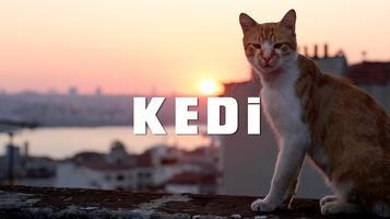 HasNa Inc. 2017 Annual Film Screening: KEDI (Cats)