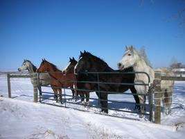Equine Workshop: Keeping Your Heart Open Amidst...