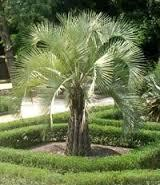 Basics of Palm Care