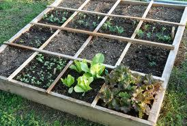 The Basics of Square Foot Gardening