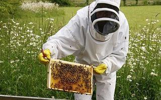 Beekeeping for Beginners- February