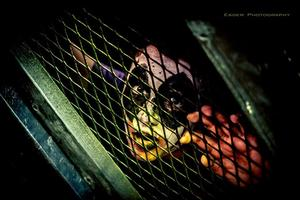Horror Paranormal Fear Fest