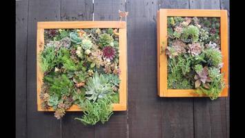 Women, Woodworking, and Wine: Vertical wall garden