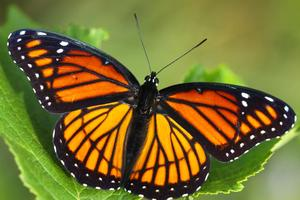 Bugs and Butterflies in Your Backyard