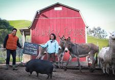 Lucky Ones Ranch Non-Profit Animal Sanctuary logo