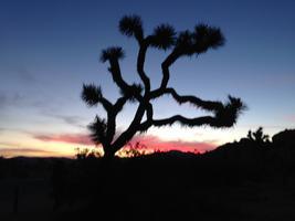 Joshua Tree Weekend: Yoga, Hiking, and Rock Climbing!