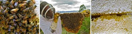 Introduction to Small-Scale Beekeeping