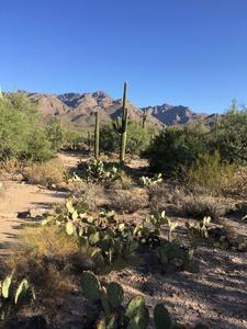 Tucson Very Easy Hiking & Walking logo