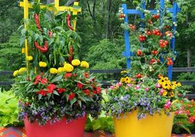 Colorful Flowers and Veggies in Flower Pots