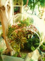 Hanging Succulent terrarium at New People (Utsuwa...