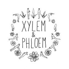 Xylem and Phloem logo