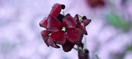 Spring Garden Photography Workshop