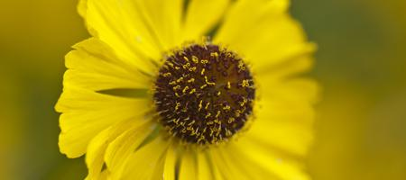 Close-up Flower Photography Workshop