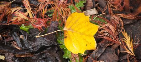 Autumn Garden Photography Workshop