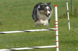 Intermediate Agility