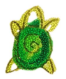 Turtle Yoga by Helen Macintyre (nee Turtle) logo